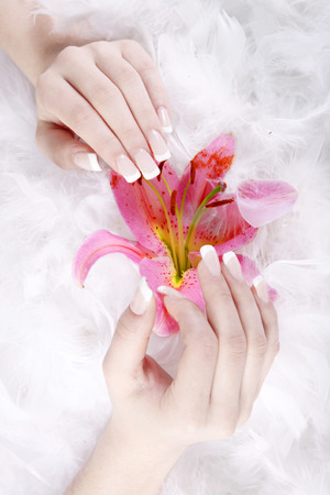 french manicure sexy woman: beautiful hands and nails with feathers