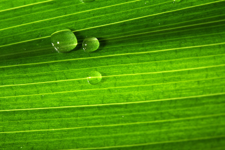 groen blad van een plant met waterdruppels