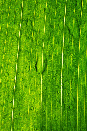 waterdrops: green leaf of a plant with waterdrops Stock Photo