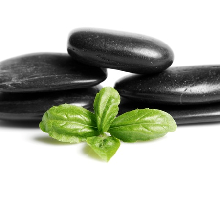 Black stones and leafs isolated on white background Stock Photo - 17829462