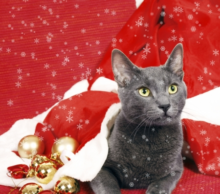 christmas pussy: Adorable christmas cat and snowflakes