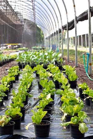 vegetable garden Stock Photo - 12017876