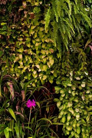 bush wall Stock Photo - 12064982