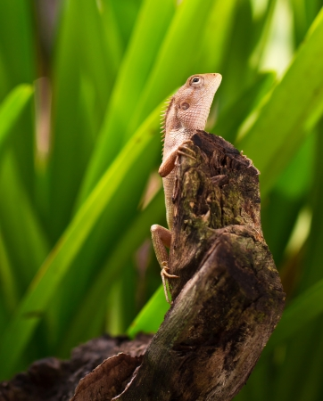 a photo of reptile on wood in nature light