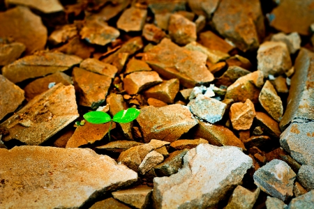 Green sprout growing from broken stone
