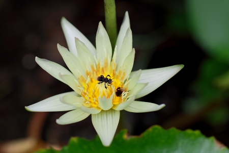 a photo of two insects in a lotus Stock Photo - 14844190
