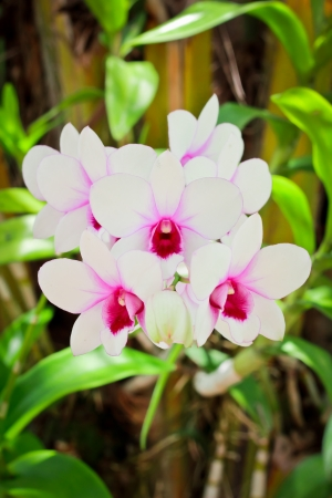 Beautiful magenta orchid on green leaf background Stock Photo - 14922062