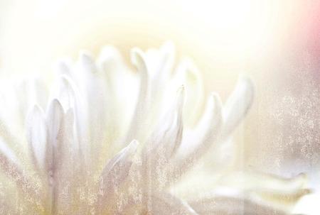 a macro photo of white flower,grunge texture
