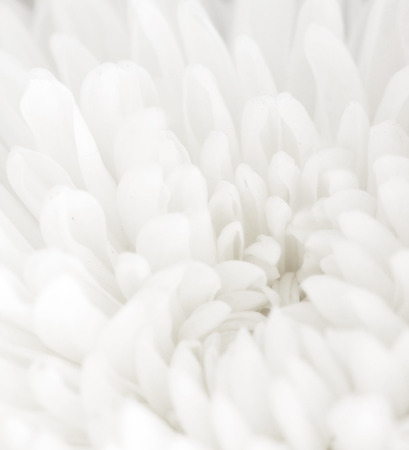 a macro photo of white flower with vintage color Stock Photo
