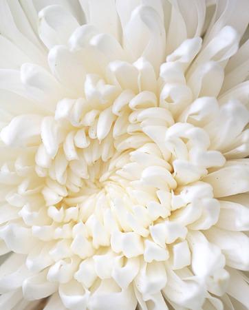 a macro photo of white flower
