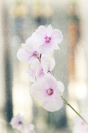 a photo of close up orchid [phalaenopsis] in natural,with fabric texture