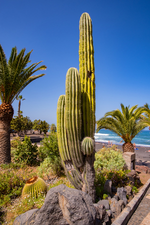 Playa Jardin - Puerto de la Cruz One of the most beautiful beaches in Tenerife. The beach Playa Jardin, a black sandy beach, is located in the north of Tenerife in Puerto de la Cruz.
