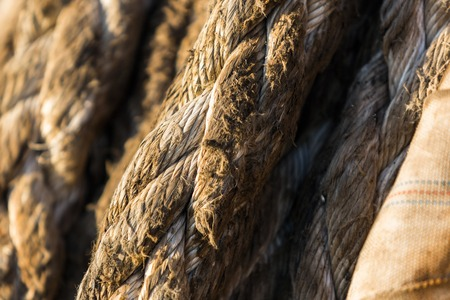 Background of a closeup view of a old, used mooring rope. Stock Photo