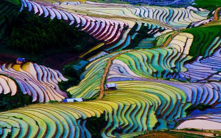 Risaia schiera a Mu Cang Chai di stagione acqua, Vietnam Archivio Fotografico - 42557855