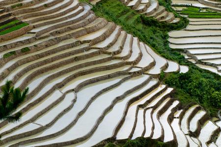 Risaia schiera a Mu Cang Chai di stagione acqua, Vietnam Archivio Fotografico - 42557853