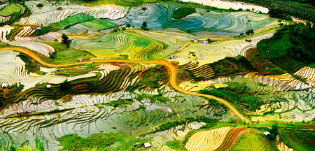 Terraced ricefield in water season in laocai, Vietnam Zdjęcie Seryjne