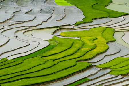 Terraced ricefield in Mu Cang Chai in water season, Vietnam