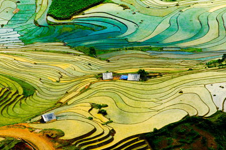 ricefield: Terraced ricefield in water season in laocai, Vietnam Stock Photo