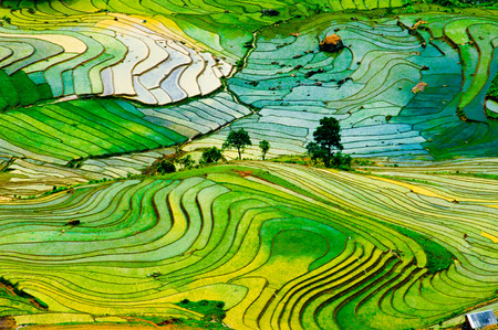 paisajes: Arrozal adosada en temporada agua en Laocai, Vietnam
