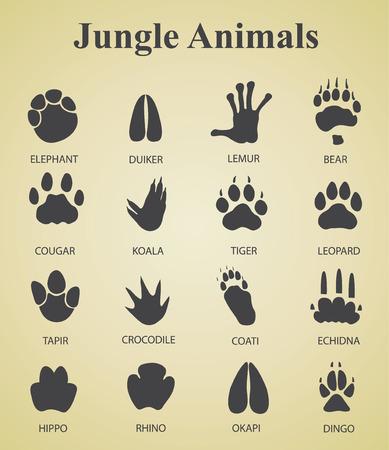 Conjunto de huellas de animales de la selva