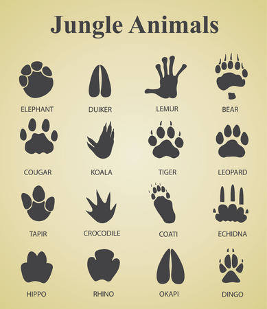koala: Set of jungle animal tracks Illustration