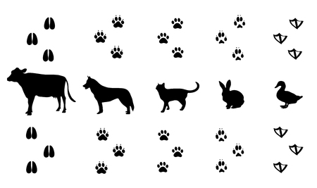 Vector set of walking wild wood animal tracks Illustration