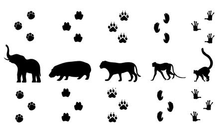 huellas de animales: Vector conjunto de caminar huellas de los animales de la selva Vectores