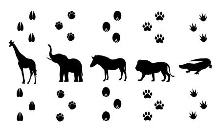 huellas de animales: vector conjunto de huellas de animales que caminan Safari