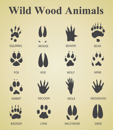 huellas de animales: un conjunto de huellas de animales silvestres madera