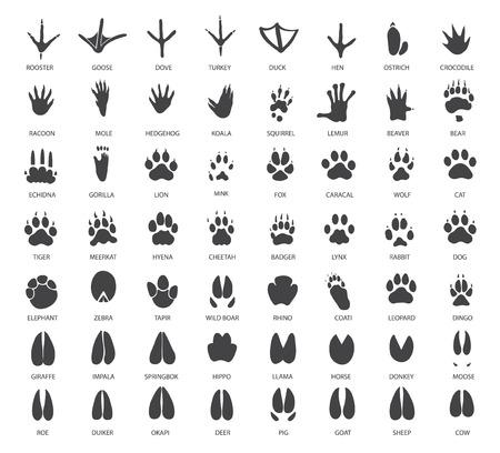 siluetas de elefantes: vector conjunto de huellas de animales Vectores