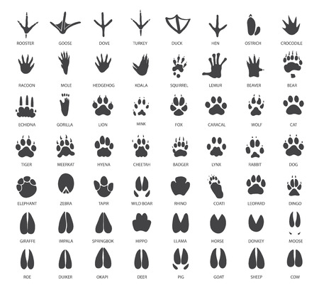 animal farm duck: Vector set of animal tracks