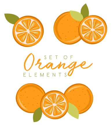 Set of fresh orange fruits, collection of vector illustrations
