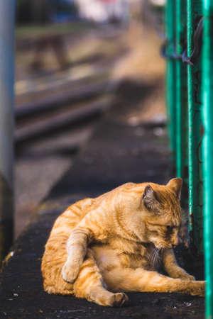 Tabby-printed stray cat grooming