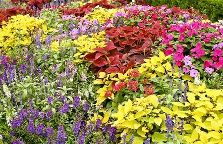 purples: Field of Flowers