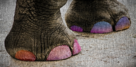 painted toes: Elephant Feet