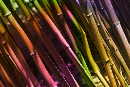 Colorful Bamboo Reeds - Background Image