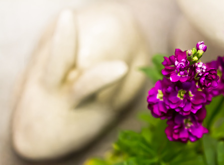 White Rabbit and Purple Flowers - Little Hints of Spring
