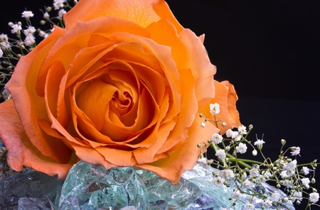 Fire and Ice - Peach Rose on Glass Rocks