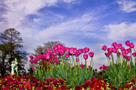 Pink Tulips with Statue Against Blue Sky