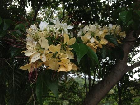 Weiße Blumen-Arrangement Lizenzfreie Fotos, Bilder Und Stock ...