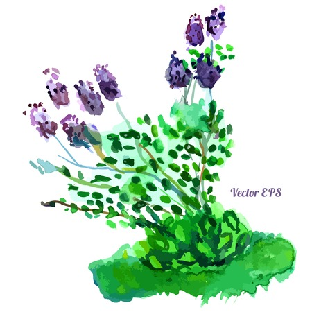 bloomer: Beautiful lilac bush, isolated object, green bloomer Illustration