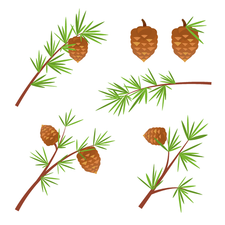 softwood: Various spruce branches with cones, the element of the Christmas tree, vector illustration Illustration