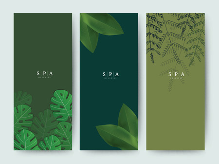 Branding Packaging palm coconut bamboo tree leaf nature background, logo banner voucher, spring summer tropical, vector illustration