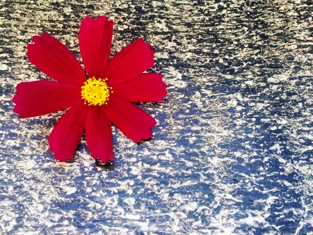 ruberoid: red flower on a background of ruberoid