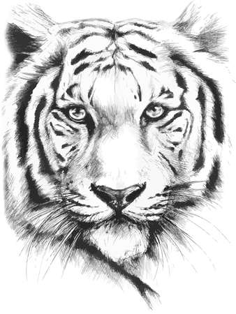 undomesticated cat: black and white painted tiger