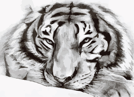 undomesticated: black and white painted tiger