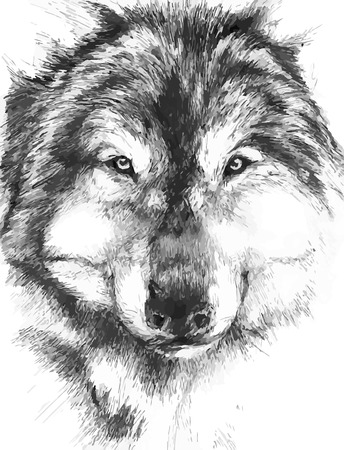 wolf face: black-white painted wolf Illustration