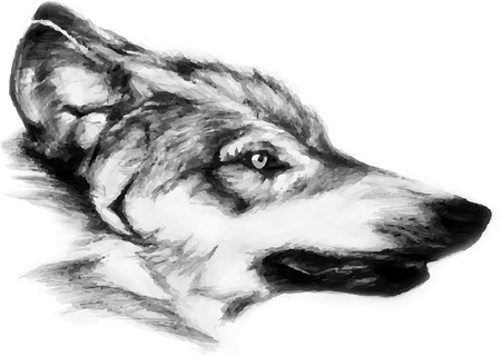 waiting in line: black-white painted wolf Illustration