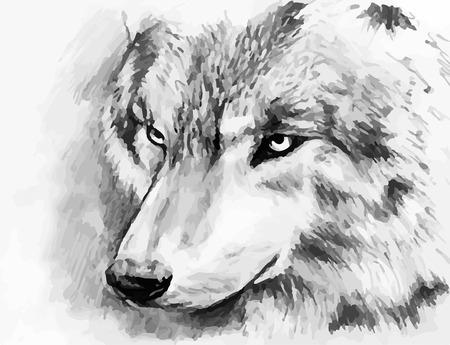 흑백는 늑대를 그린 일러스트
