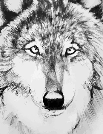그린: black-white painted wolf 일러스트